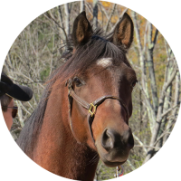 Experiential Learning with Horses - brown horse looks into camera as person looks at horse