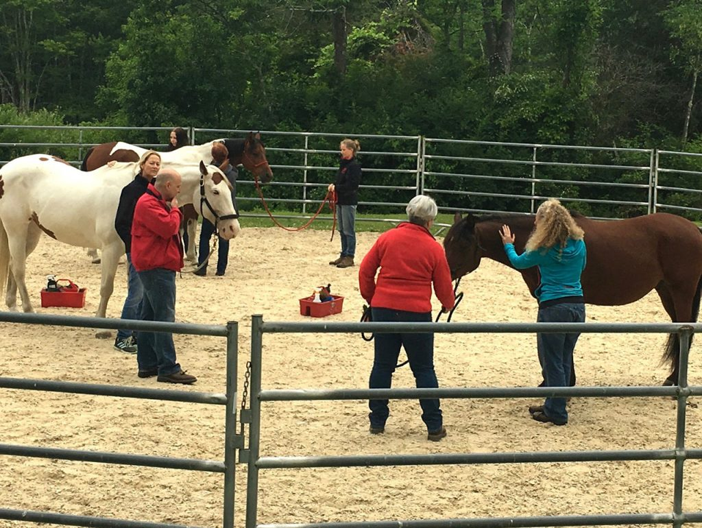 Students work with horses in the round pen as instructors facilitate