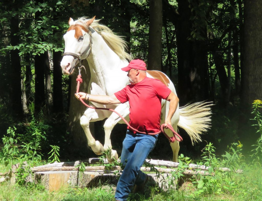 Programs for People in Recovery - Man running with jumping horse
